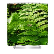 Fresh Fern - Featured 2 Shower Curtain