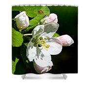 Fresh Fruit Blossoms Shower Curtain