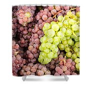 Fresh Grapes On Display Shower Curtain