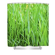 Fresh Grass Shower Curtain