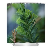 Fresh Growth Redwood Shower Curtain