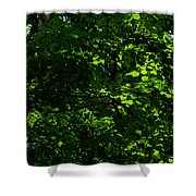 Fresh Linden Tree Foliage - Featured 2 Shower Curtain