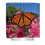 Fresh Monarch Butterfly Shower Curtain