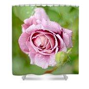 Fresh Morning Rose Shower Curtain