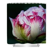 Fresh New Beginnings Shower Curtain