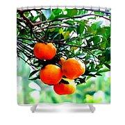 Fresh Orange On Plant Shower Curtain
