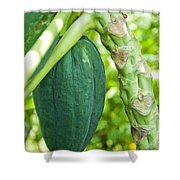 Fresh Papaya Shower Curtain