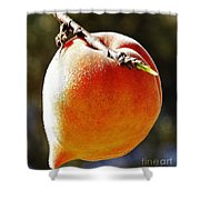 Fresh Peach Shower Curtain