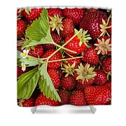 Fresh Picked Strawberries Shower Curtain