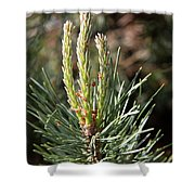 Fresh Pine Sprouts Shower Curtain