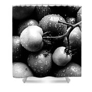 Fresh Ripening Tomatoes In Black And White. Shower Curtain