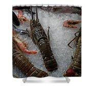 Fresh Santorini Lobsters Shower Curtain