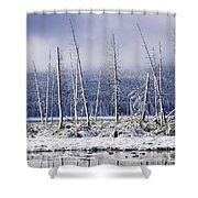 Fresh Snowfall And Bare Trees Shower Curtain