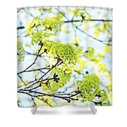 Fresh Spring Green Buds Shower Curtain