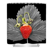 Fresh Strawberry And Leaves Shower Curtain