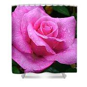 Fresh Sweet Surrender Rose Shower Curtain