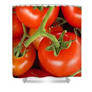 Fresh Whole Tomatos On Vine Shower Curtain