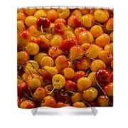 Fresh Yellow Cherries Shower Curtain