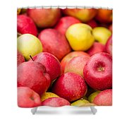 Freshly Harvested Colorful Crimson Crisp Apples On Display At Th Shower Curtain