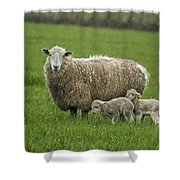 Freshly Made - Winter Lambs Shower Curtain