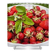 Freshly Picked Strawberries Shower Curtain