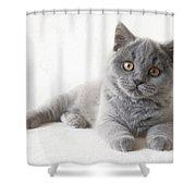 Friend Shower Curtain