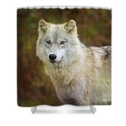 Friendly Beauty.. Shower Curtain