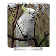 Friendly Cockatoo Shower Curtain