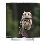 Friendly Owl In The Forest Shower Curtain