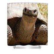 Friendly Tortoise Shower Curtain