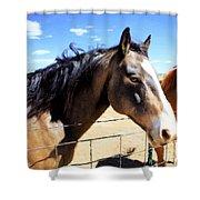 Working Horse Shower Curtain