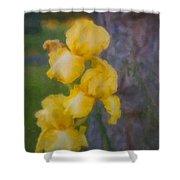 Friendly Yellow Irises Shower Curtain