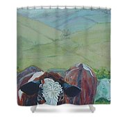 Friesian Holstein Cows Shower Curtain