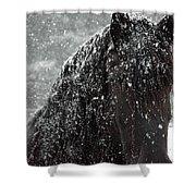 Friesian Snow Shower Curtain by Fran J Scott