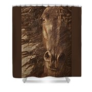 Friesian Spirit Shower Curtain