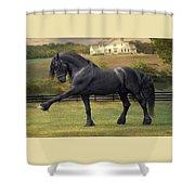 Friesian Stallion Tije Spanish Walk Shower Curtain