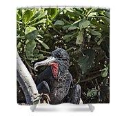 Frigate Bird- Hawaii V2 Shower Curtain
