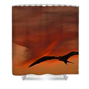 Frigate Bird Shower Curtain