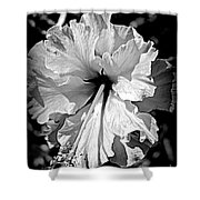 Frills And Hibiscus Flowers Shower Curtain