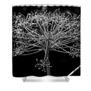 Frills In Black And White Shower Curtain