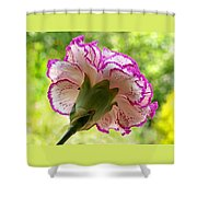 Frilly Carnation Shower Curtain