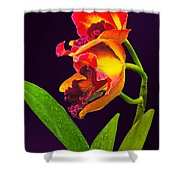 Frilly  Red And Yellow Orchids Shower Curtain