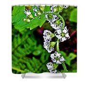 Fringe Cups On Clatsop Loop Trail In Ecola State Park-oregon Shower Curtain