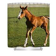 Frisky Colt Shower Curtain