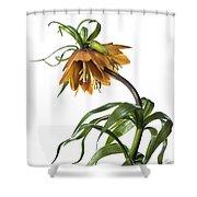Fritillaria Imperialis Shower Curtain