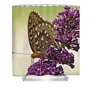Fritillary Butterfly On Buddleia Shower Curtain