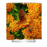 Fritillary On Butterfly Weed Shower Curtain