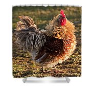 Frizzle Rooster Shower Curtain