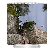 Frog At Edge Of Pond Shower Curtain