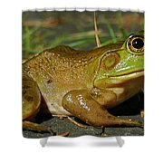 Frog At Night Shower Curtain